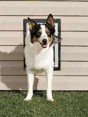 Energy-Saving Tip #22: Be sure to use an insulated pet door